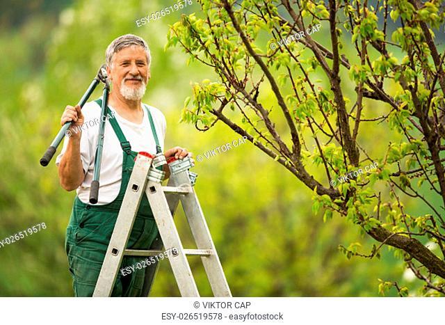 Senior man gardening in his garden (color toned image)
