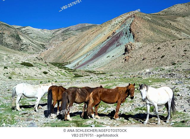 Horse caravan. Trekking in Markha valley (Laddakh, India)