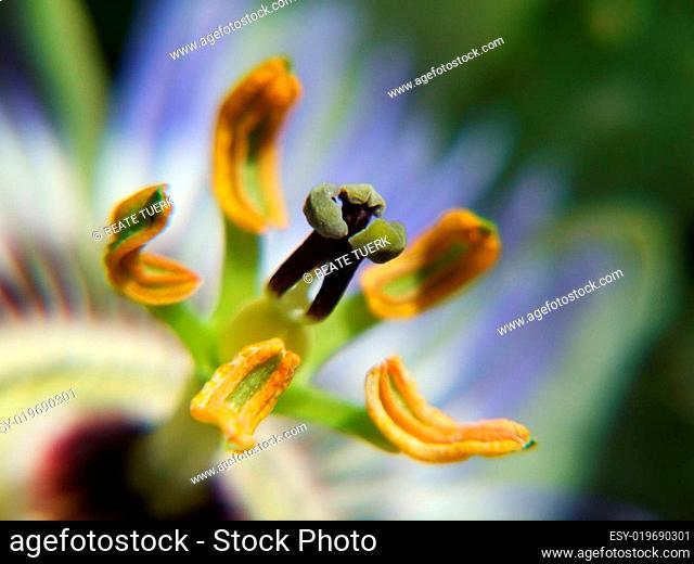 Makro Pollen
