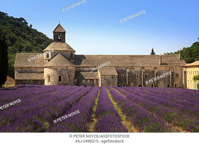 Notre-Dame de Senanque Abbey Provence France with lavender in full bloom