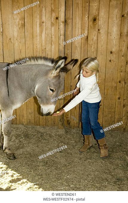 Girl feeding donkey