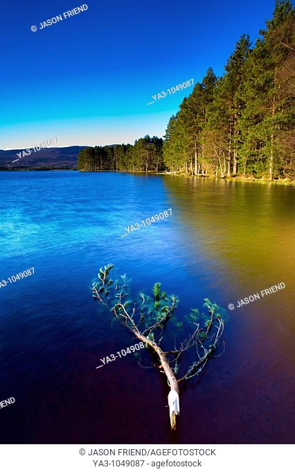 Scotland, Scottish Highlands, Cairngorms National Park  Loch Garten fringed by the Abernethy Forest