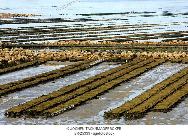FRA, France, Normandy: Oyster farm of St. Vaast la Hougue