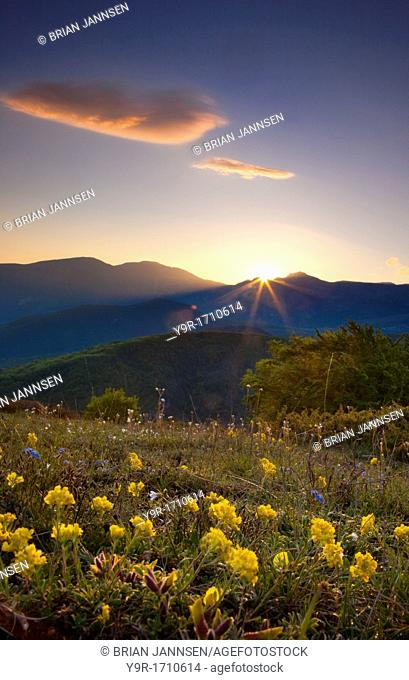 Wildflowers at sunrise on Monti Maraconi in the Monti Sibillini National Park, Umbria, Italy