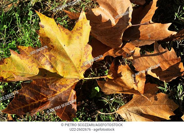 Bologna (Italy): leaves in autumn