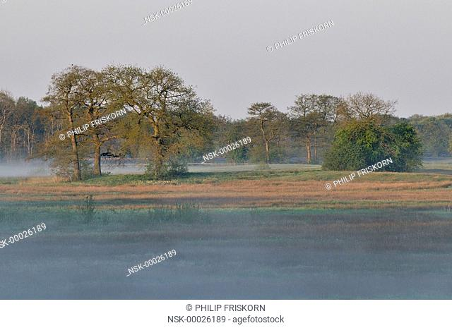In spring after a cold night haze is covering the river, The Netherlands, Drenthe, National Parc Drentsche Aa