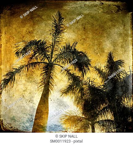 Coconut palm trees against a brilliant sky in Florida