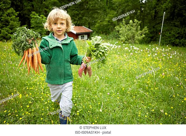 Portrait of boy carrying bunches of carrots across garden