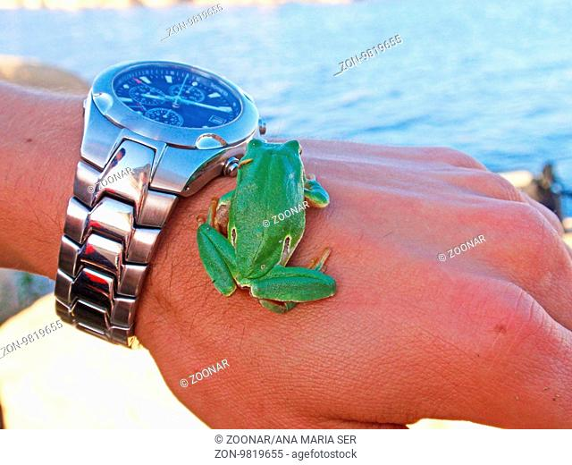 Tree frog on a hand