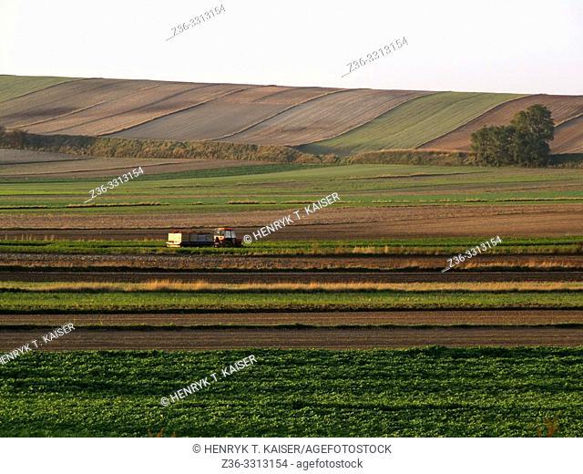 Agriculture in Lasser Poland near Slomniki