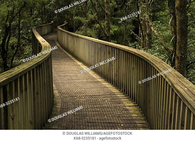 Walkway in the forest of the Whangarei Scenic Reserve; Tikipunga; North Island; New Zealand;