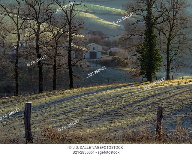 France. Auvergne, Cantal, winter by Saint Constant