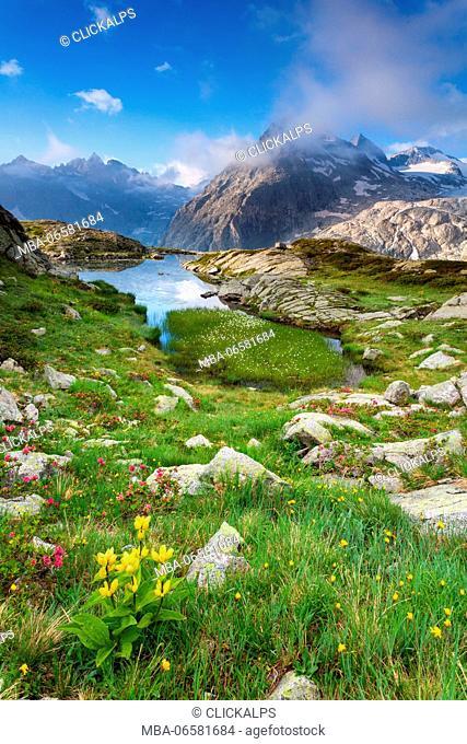 Val Genova, Adamello-Brenta natural park, Trentino-Alto Adige, Italy, The Three Lobbie mountains and Pope Johannes Paul II peak views from the Mandron refuge