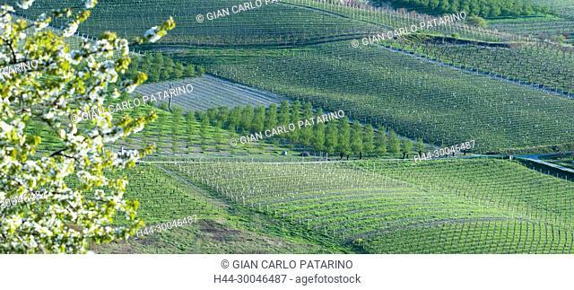 Monferrato, Piedmont, Italy, spring landscape near San Marzano Oliveto