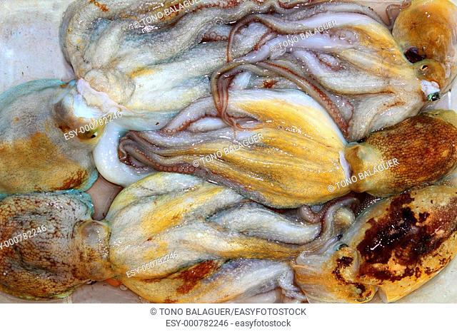 octopus and cuttlefish pattern fishing catch in mediterranean