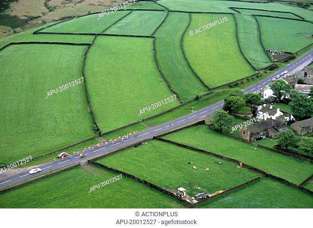 Cycling peleton races along country road