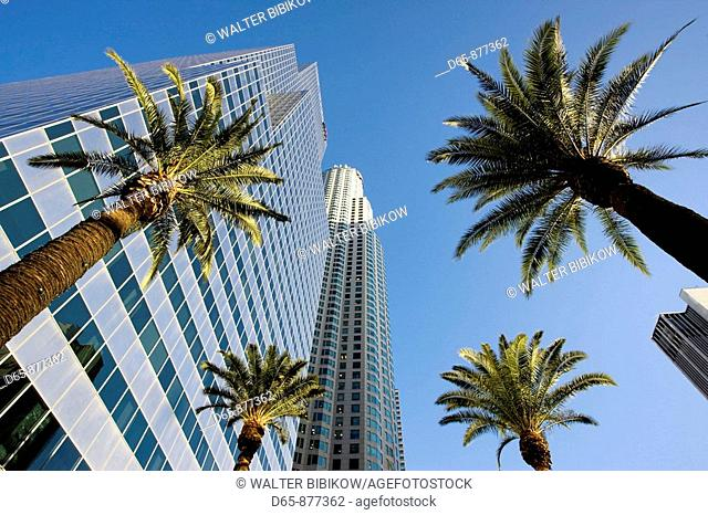 Palms and skyscrapers, downtown, Los Angeles, California, USA