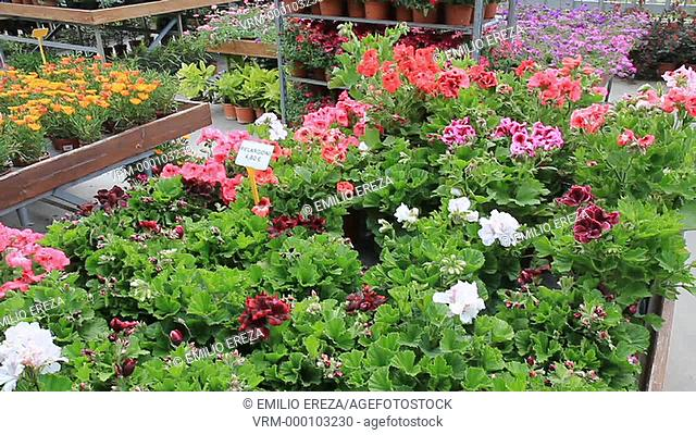Garden Center. Cambrils, Tarragona, Catalonia, Spain