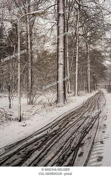 Winter scene in woods, Breda, Noord-Brabant, Netherlands