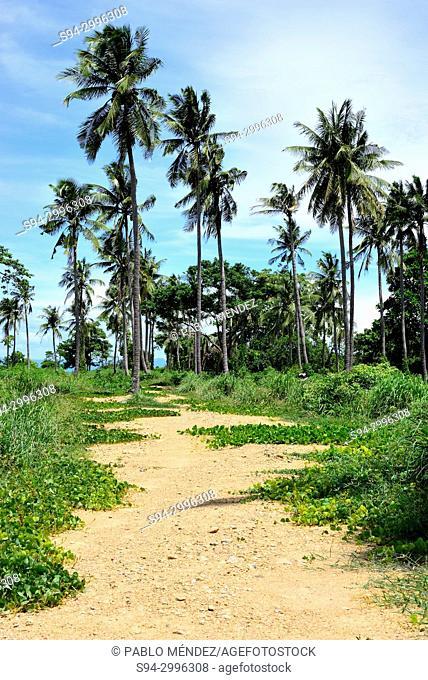 Palm trees in Koh Tonsay or Rabbit island, Kep, Cambodia
