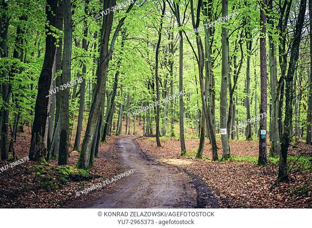 Forest road on Wolin Island, West Pomeranian Voivodeship of Poland