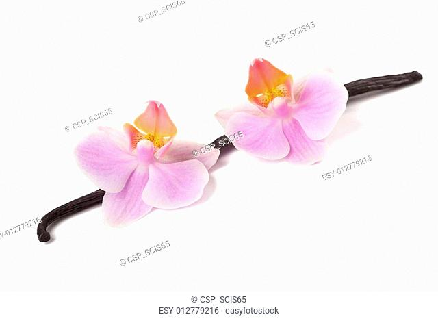 orchid and vanilla