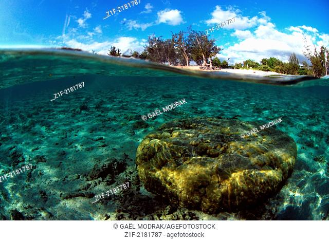Swimming in clear water of Saint-Gilles's lagoon on Réunion french island