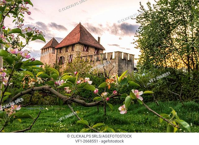 Italy, Trentino Alto Adige, Non valley; flower apples from Malogolo Castel