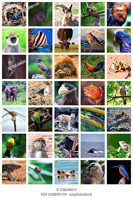 Collage made of set including 35 different animals