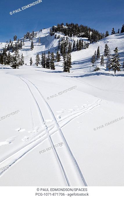 Ski Tracks Crossing in Fresh Snow