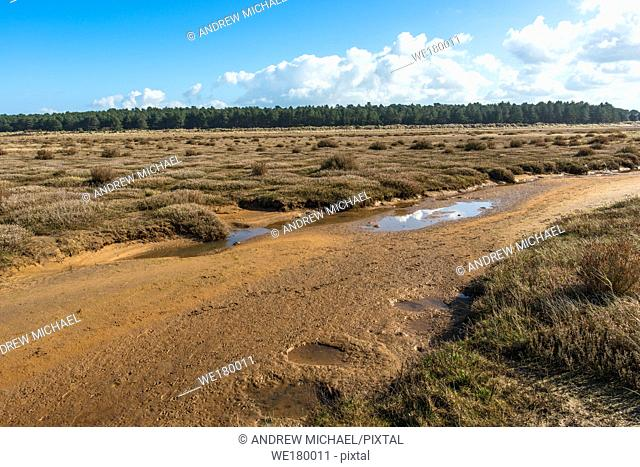 Desert like flora growing on tidal salt marsh at low tide near sand dunes on Holkham bay, North Norfolk coast, East Anglia, England,