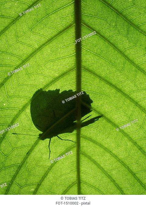 Close-up of butterfly shadow on green leaf