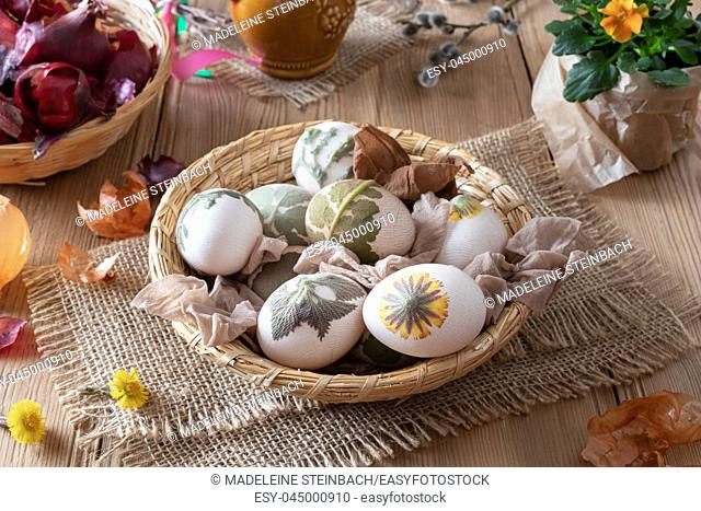 Preparation of Easter eggs for dying with onion peels with a pattern of fresh herbs