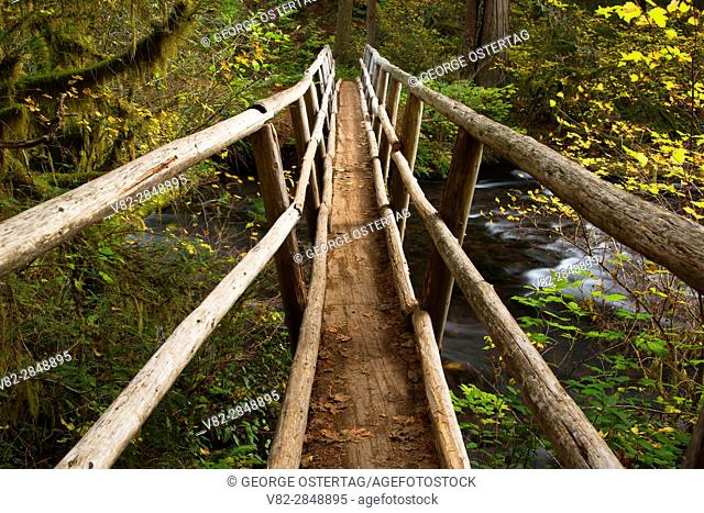Lost Creek bridge along McKenzie River National Recreation Trail, McKenzie Wild and Scenic River, Willamette National Forest, Oregon
