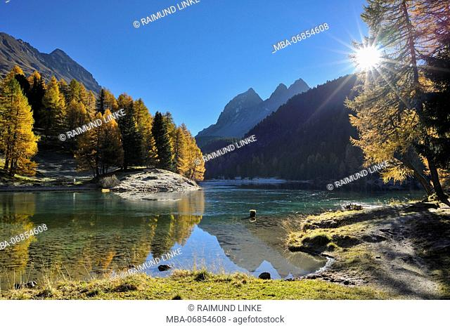 Lake with larch trees and sun in autumn, Lake Palquognasee, Lai da Palquogna, Albula-Pass, Grisons, Switzerland