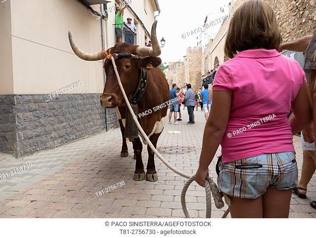 Girl holding bull .Segorbe, Castellon, Spain