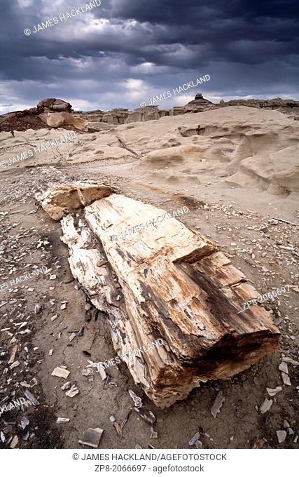 Petrified wood found in the Bisti/De-Na-Zin Wilderness, New Mexico, USA