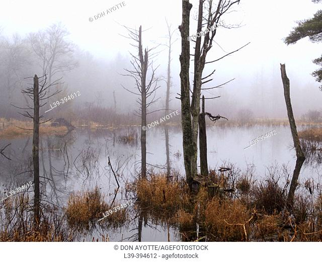Salem Fog. USA