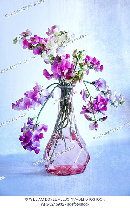 A glass vase of Sweet Peas