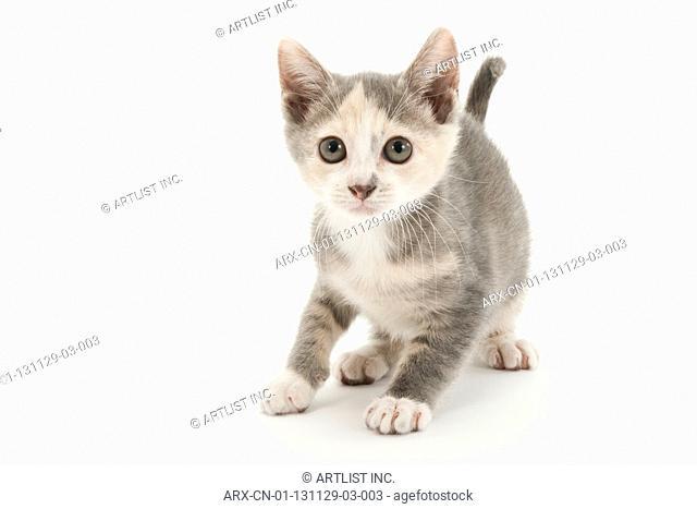 A kitten looking above