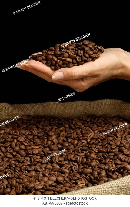 Coffee Beans in a Womans Hand Over a Jute Hessian Sack of Coffee