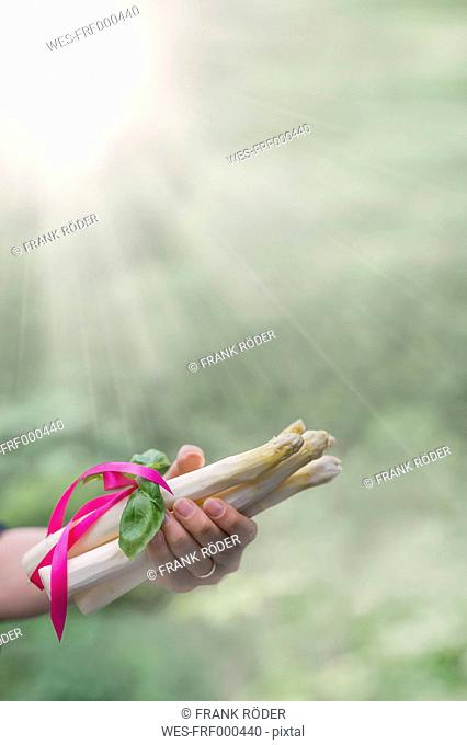 Hand of woman holding bunch of white asparagus tied with ribbond