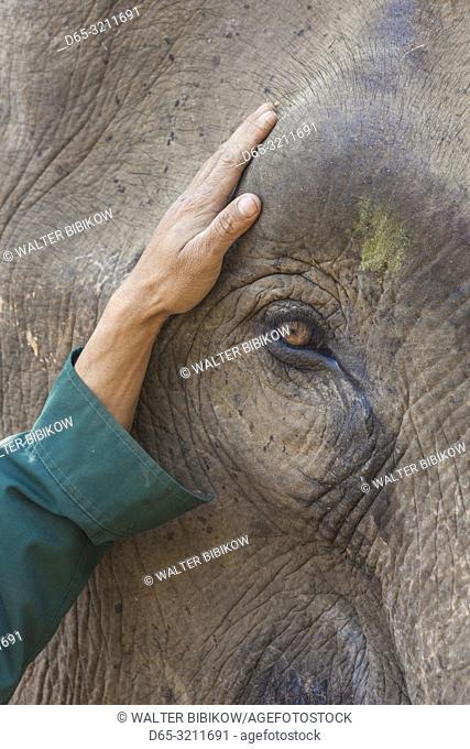 Laos, Sainyabuli, Asian Elephant, elephas maximus, elephant's eye
