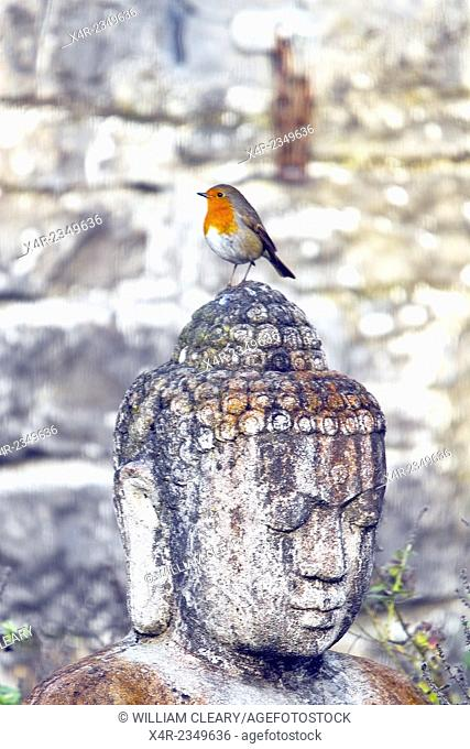 A robin perched on a Buddha statue in a garden in County Westmeath, Ireland