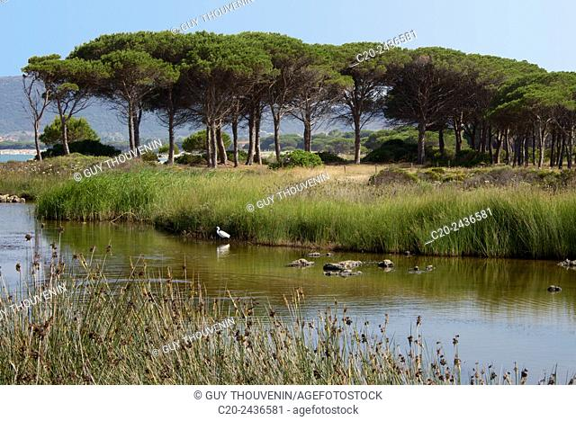 Water lake with water plants and bird on mountain, sea and beach in the background, Costa degli Oleandri, near Ottiolu harbour, Sardinia, Italy