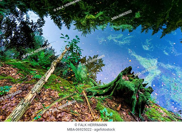 Riverside, Reflection, Water Surface, Forest