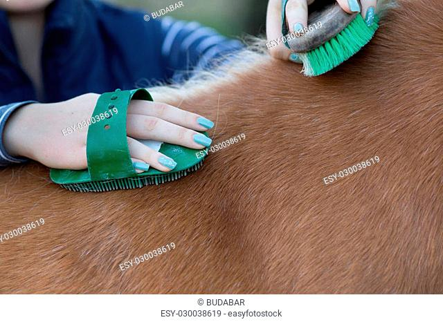 Close up of female hands grooming horse on the ranch