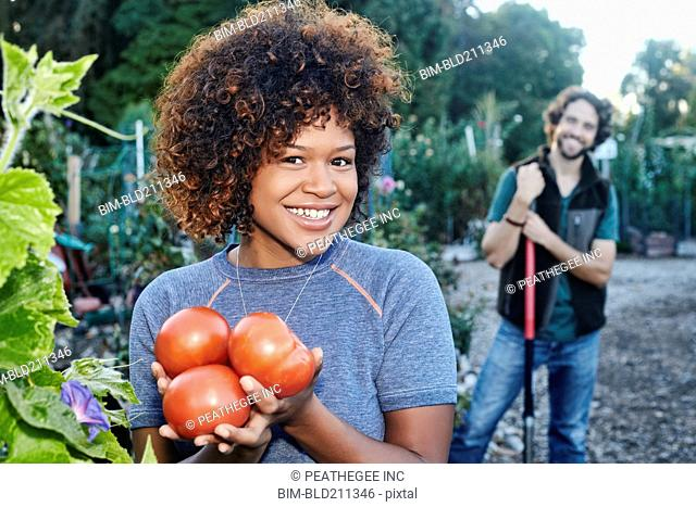 Mixed race woman picking tomatoes in garden
