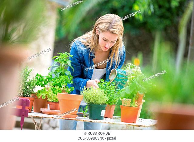 Young woman tending herb plants at garden table
