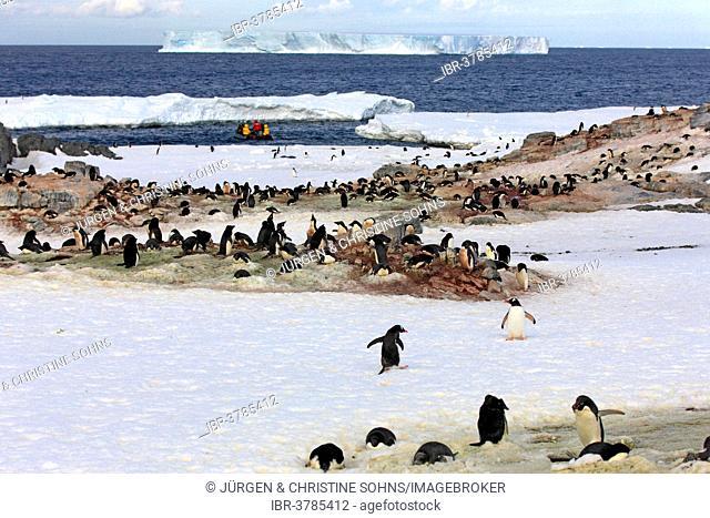 Penguin colony, Adélie Penguins (Pygoscelis adeliae), Devil Island, Weddell Sea, Antarctica